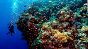 The Reef Condo